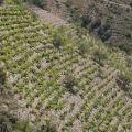 Coster de vinya