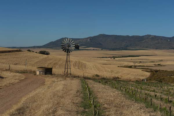 The Swartland Revolution – Tim Atkin – Master of Wine