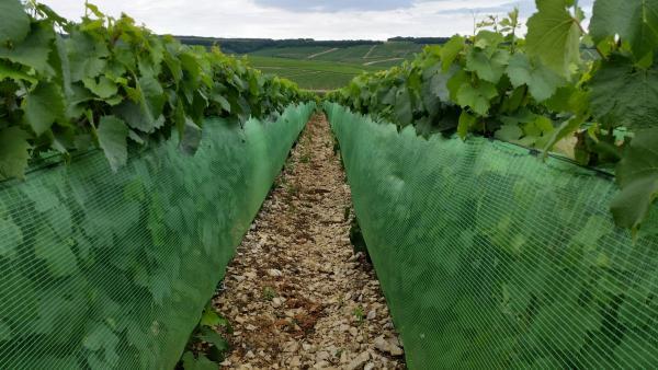 Burgundy's net benefits – Tim Atkin – Master of Wine
