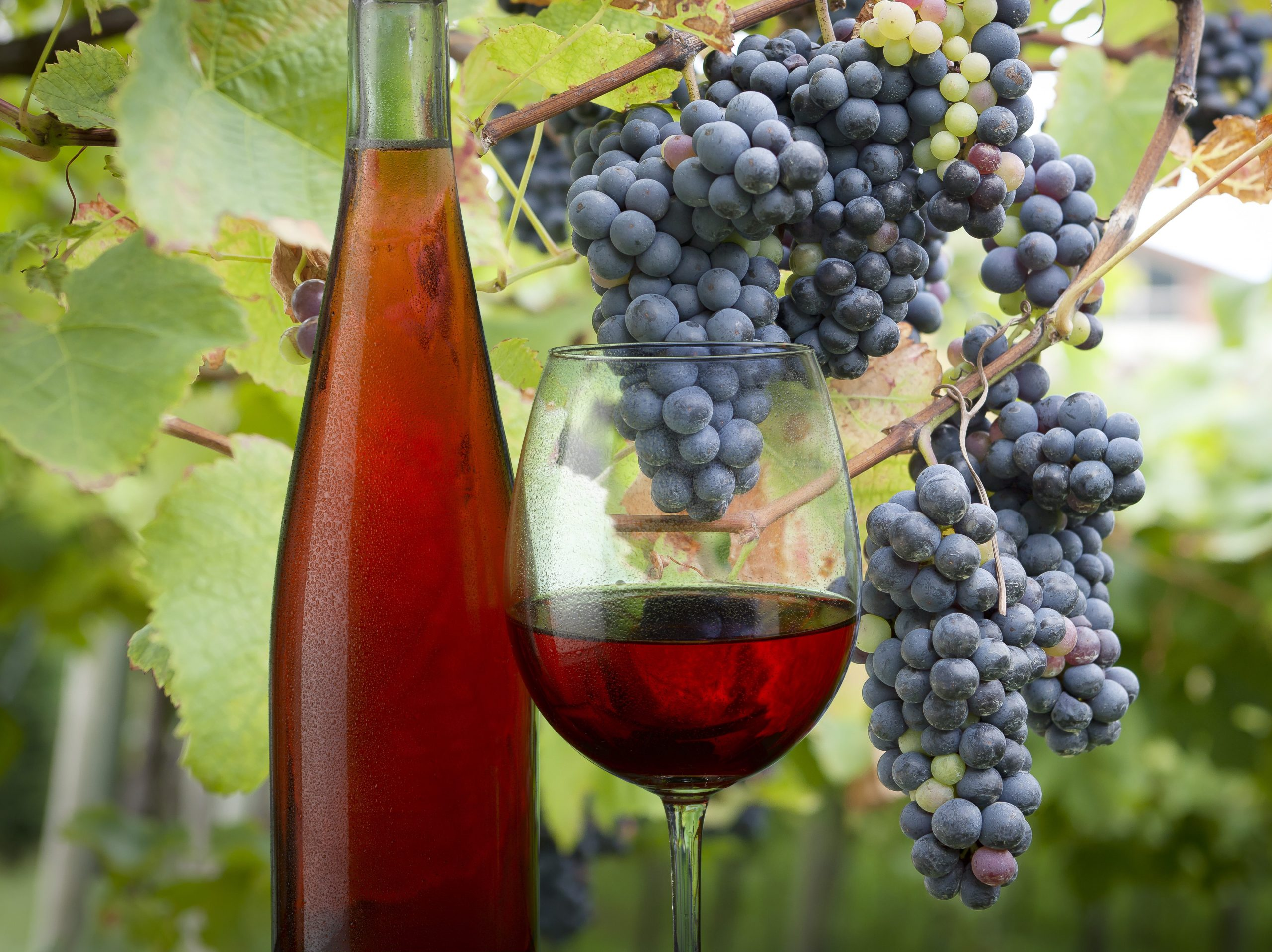 Why rosé is a wine for all seasons – Tim Atkin – Master of Wine