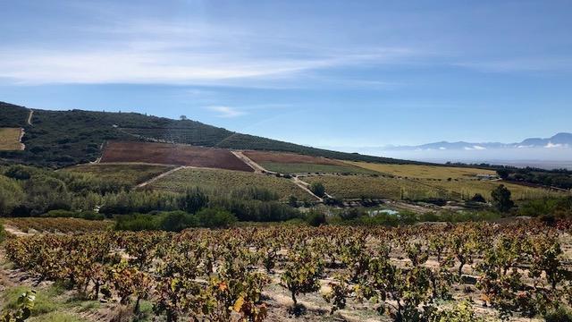 Voor-Paardeberg: The Birth of the Revolution – Tim Atkin – Master of Wine